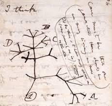 darwintree